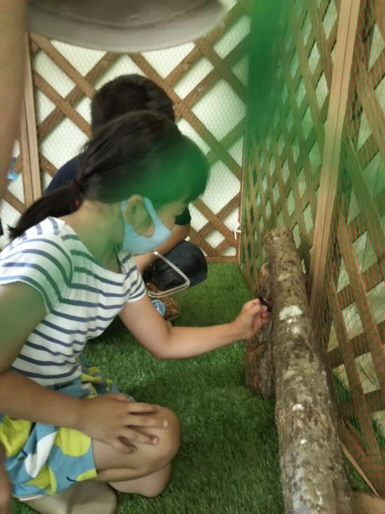 滑川市の無垢材の木の家のクワガタキングダムの捕る様子