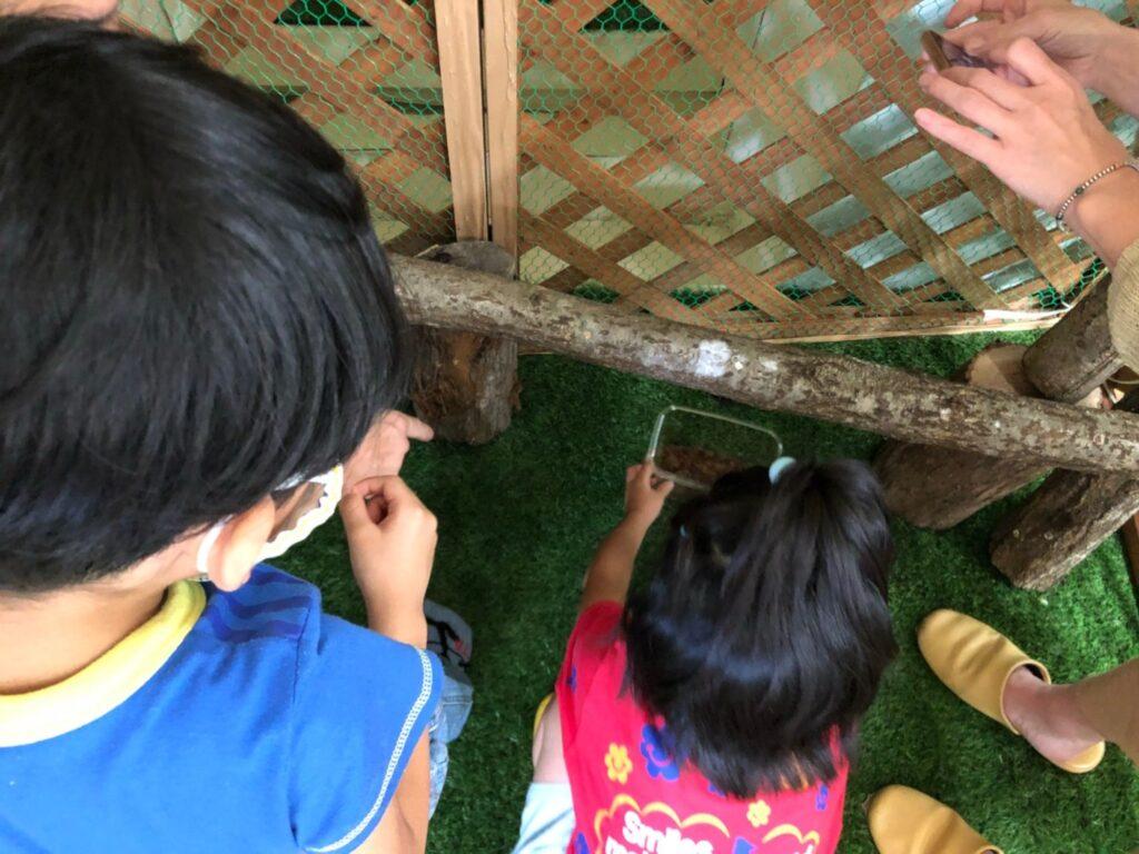 滑川市の無垢材の木の家のクワガタキングダム