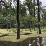 富山市の注文住宅の抗酸化効果と森林浴