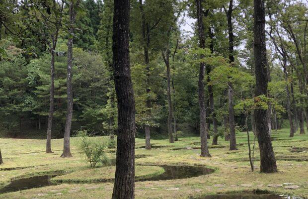 水の庭 森林浴 気持ちいい空気